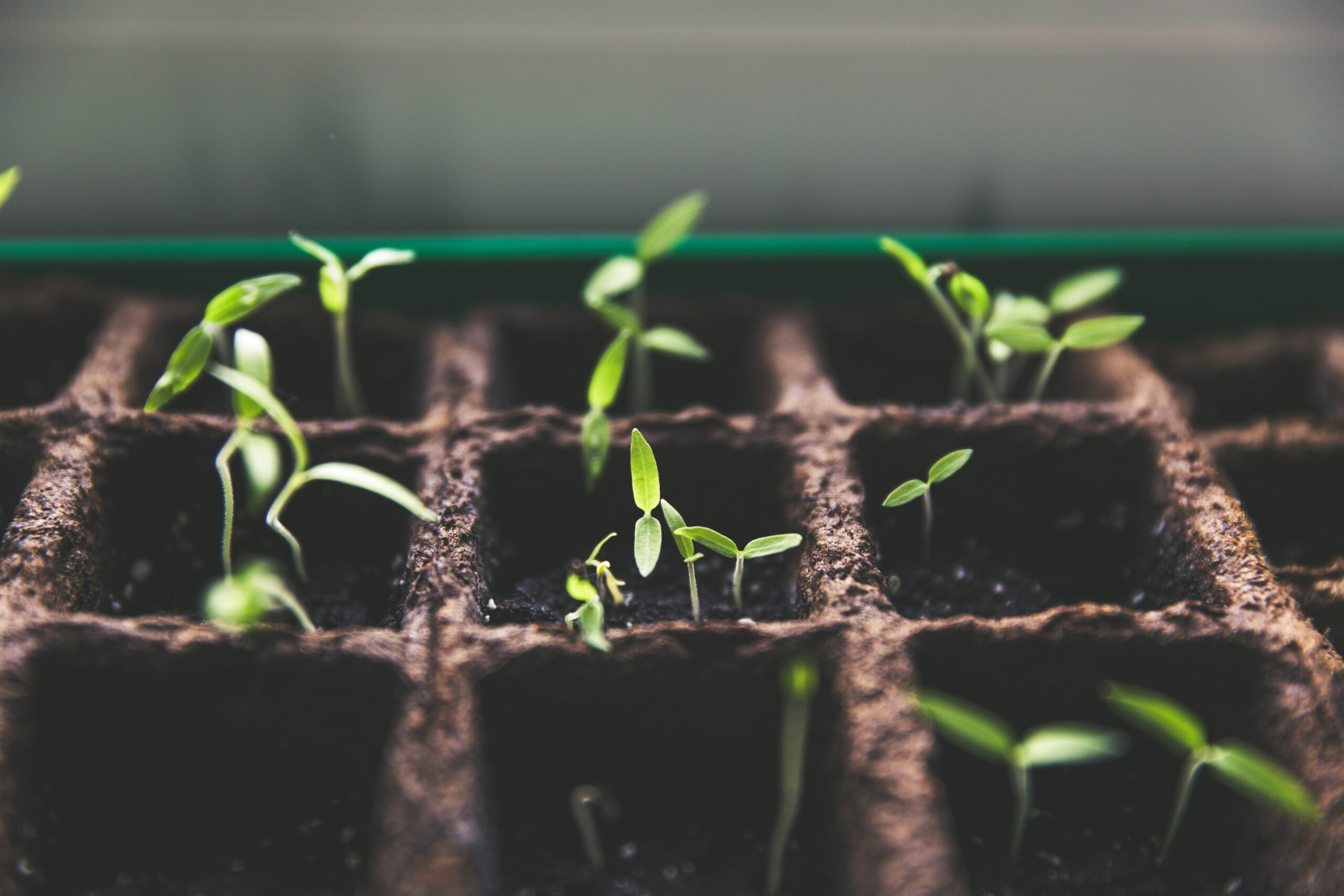 Life begins to grow